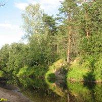 В лесу :: Сергей Беляев
