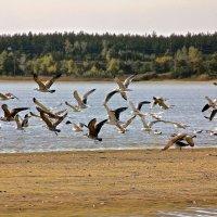 Чайки :: Евгений Леоненко