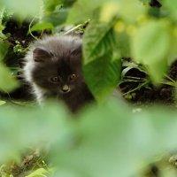 Пропавшая экспедиция.. в кустах))) :: PANDA BLACK & WHITE