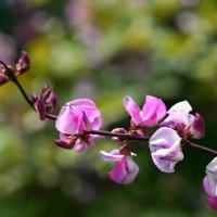 Цветок :: Diana Alekseevna
