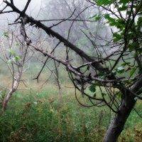 Утренний туман :: Ксения Куривчак
