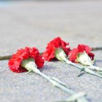 цветы :: Владимир Глазырин