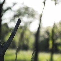 Рогатка в лесу :: Андрей Власик