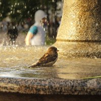 Бездомная птаха :: джек Блэкхард