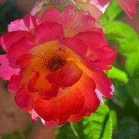 Цветок :: Yana Kashutina