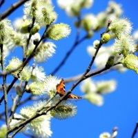 весна :: Ольга Романова