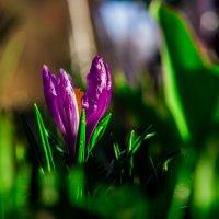 цветочки :: Антон Куланов