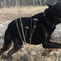 Собака :: Алина Троицкая