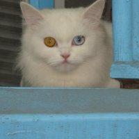 Кошка с нашего двора :: Алина Троицкая