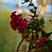 цветок :: Валерия Воронова