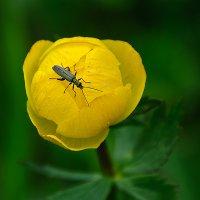 черный жук на желтом фоне :: Galina