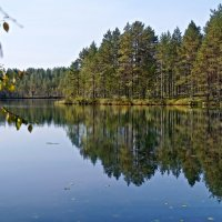 а лес стоит загадочный..... :: Ольга Cоломатина