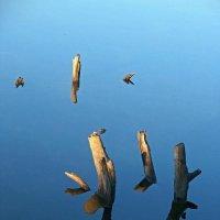 Тихая вода :: Сергей Тарабара