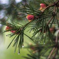 майский дождь :: GULLSHAT