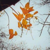 Осень :: Дмитрий Новиков