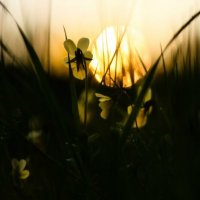 Sunset :: Oksana Sansnom