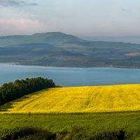 Цветущие поля рапса на берегу Сенгилея! :: Фёдор. Лашков