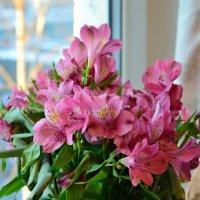 Розовый, но не из роз... :: Алексей К