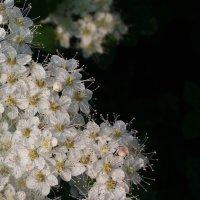 Цветы :: Николай Филоненко
