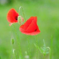 Романтичная весна :: Swetlana V