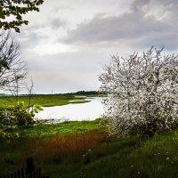 Хороши весной... :: Юрий