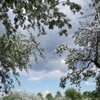 Весна :: Nikanor