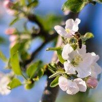 Spring :: Аня Струкова