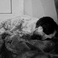 спит моя радость :: Валерия Воронова