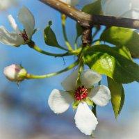 Жизнь в цветке :: Нина