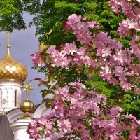 Весна-красна :: Святец Вячеслав