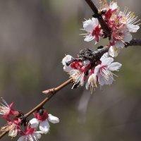 Весна :: Светлана Петрунина