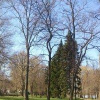 Петергоф, Нижний парк. :: Подруга Подруга