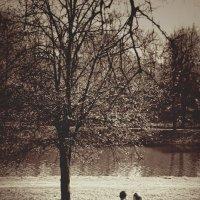 Весна, время любви :: Алексей Соминский