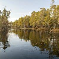 Река Орть-Ягун :: Виталий Макаров