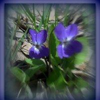 Весны движение. :: Мила Бовкун