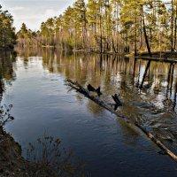 Весна на реке :: Виталий Макаров