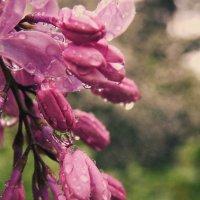 дождливое :: BioJ .