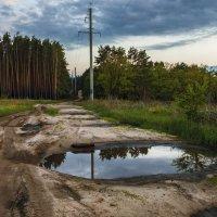 Лесная дорога :: Юрий Клишин