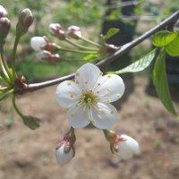Весна пришла! :: Виктория Нефедова