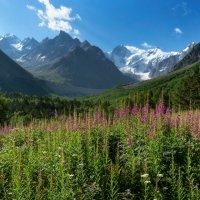 В горах цветет Иван - Чай :: Елена Брежицкая