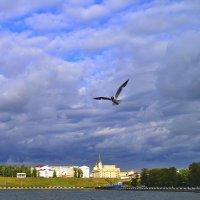 чайка :: Алексей Могилёв