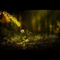весна под ногами... :: Сергей Вьюгин
