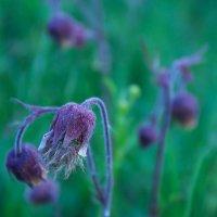Сон-трава :: Марина Симакова