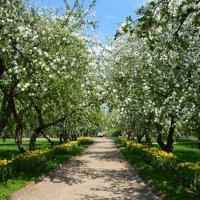 В весеннем саду :: Арина