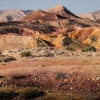 Палитра пустыни :: Валерий Цингауз