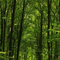 Лесные ворота :: Марат Макс