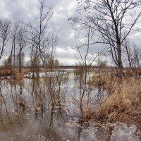 Вешние воды :: Валерий Талашов