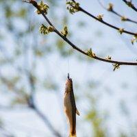 Рыба на ветке) :: Татьяна