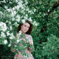 Яблоневый цвет :: Евгения Чернова