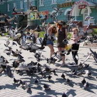 голубь- птица мира :: Ирина